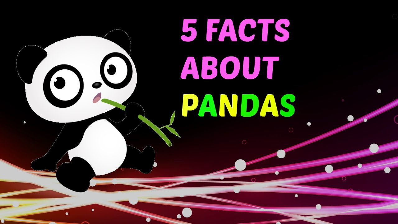 Panda clipart interesting fact YouTube About Facts Pandas Facts