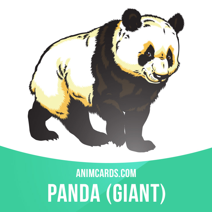 Panda clipart omnivores But fish whilst omnivores mammals