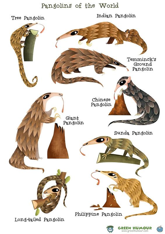 Animal Kingdom clipart fauna Best Pangolin Card on Greeting