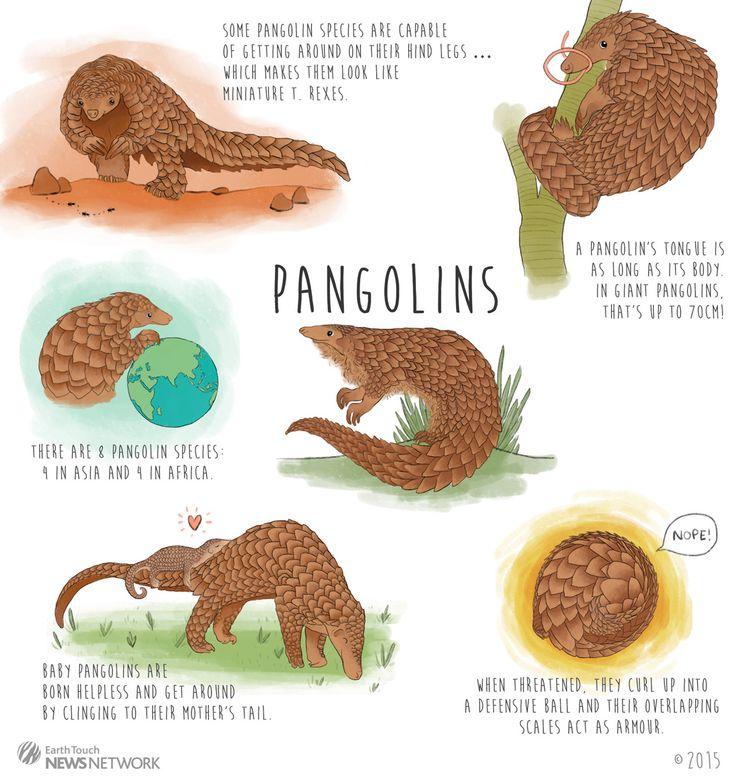 Pangolin clipart Penguin Clipart Touch from pangolin PANGOLINS (@ProjectPangolin)