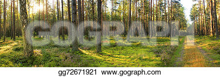 Panorama clipart forest Lithuanian Drawing Illustration Clipart Forest