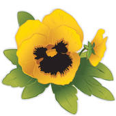Pansy clipart Art · Pansy GoGraph Clip