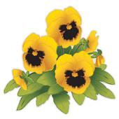 Pansy clipart Royalty Gold or Clip flowers