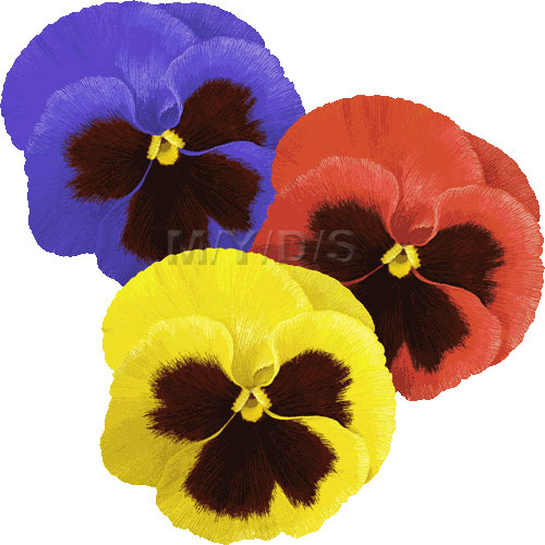 Pansy clipart Art Pansy Violets Free Large