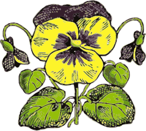 Pansy clipart  free royalty Clip Pansy