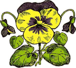 Pansy clipart Royalty Clker Clip art Art