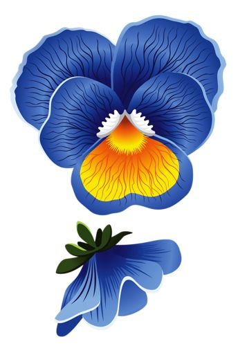 Pansy clipart blue #3