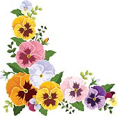 Pansy clipart border Pansy Clipart Colorful corner illustration