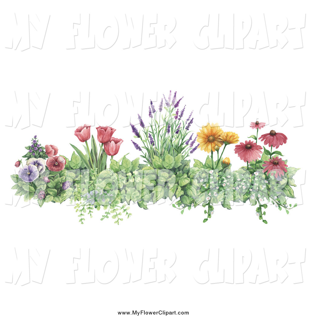 Pansy clipart border Art of Lavender  Pansies