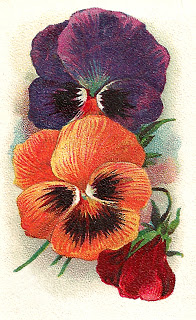 Pansy clipart botanical Image  Antique Pansy Artwork