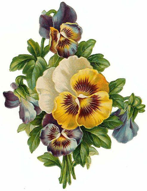 Pansy clipart botanical Pansies pansies Pinterest Clip of