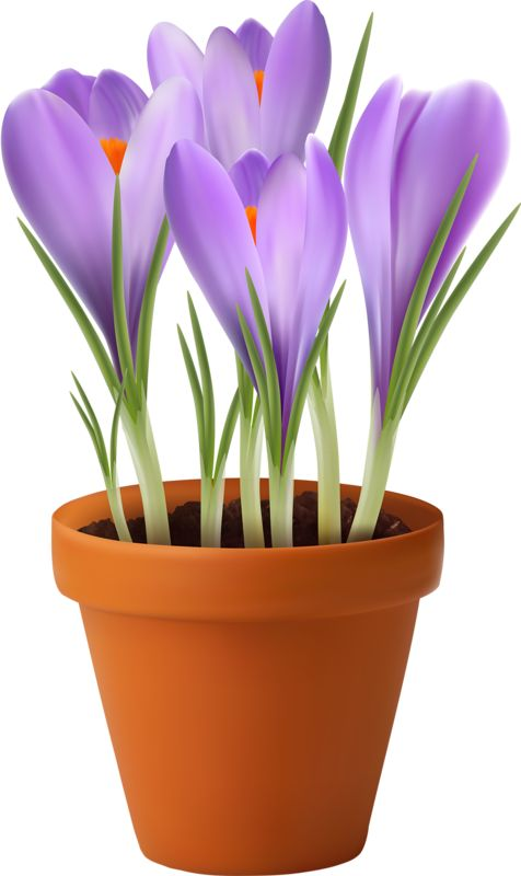 Pansy clipart potted flower #9