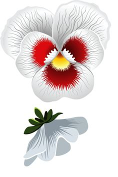 Pansy clipart red Pansy  Shutterstock Photos &
