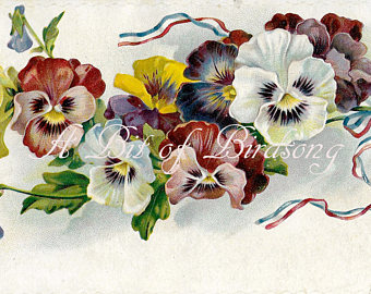 Shell clipart pansy #7