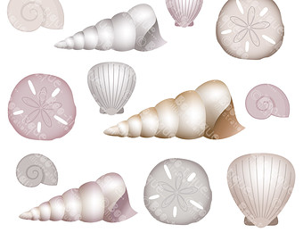 Pansy clipart shell #9