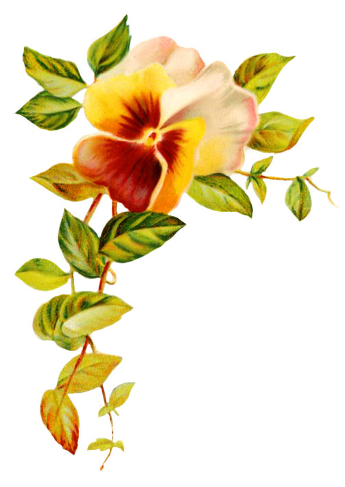 Pansy clipart single Own clipart leaves Clipart Wedding