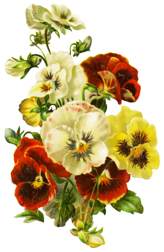 Pansy clipart single Wedding clipart your Clipart leaves