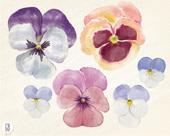 Pansy clipart spring flower #9