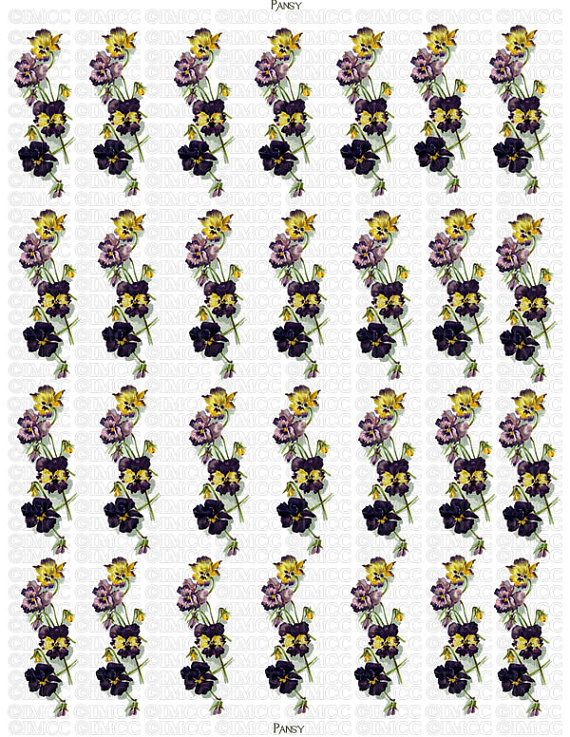 Pansy clipart swag #13