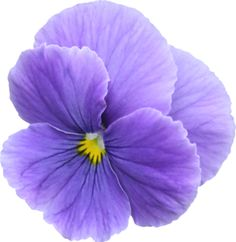 Pansy clipart swag #8