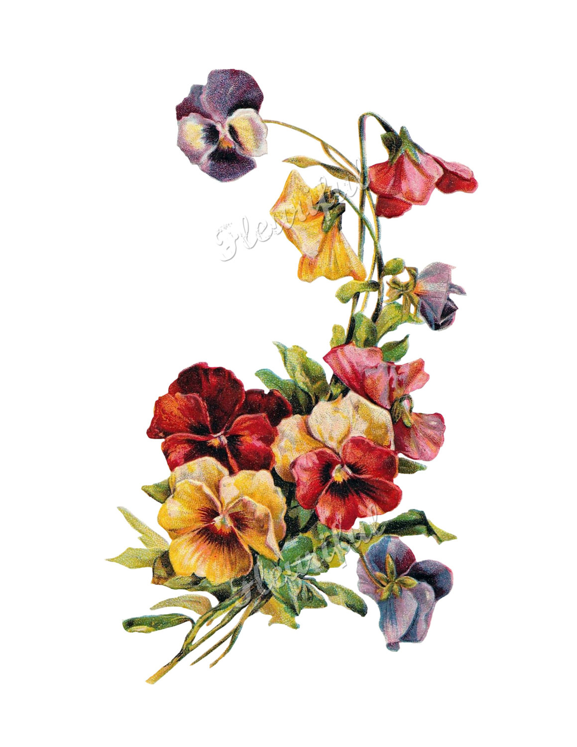 Pansy clipart victorian Scrapbooking Clip Art Victorian