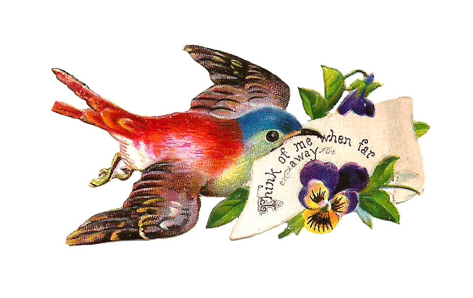 Pansy clipart victorian Clip from with Free Bird