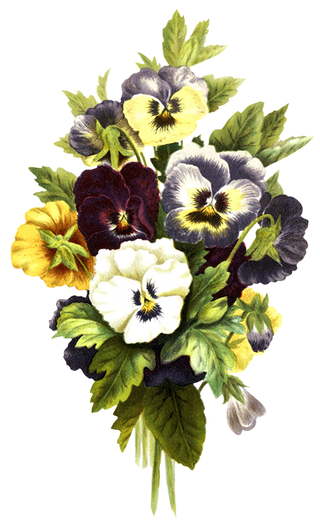 Pansy clipart vintage #10