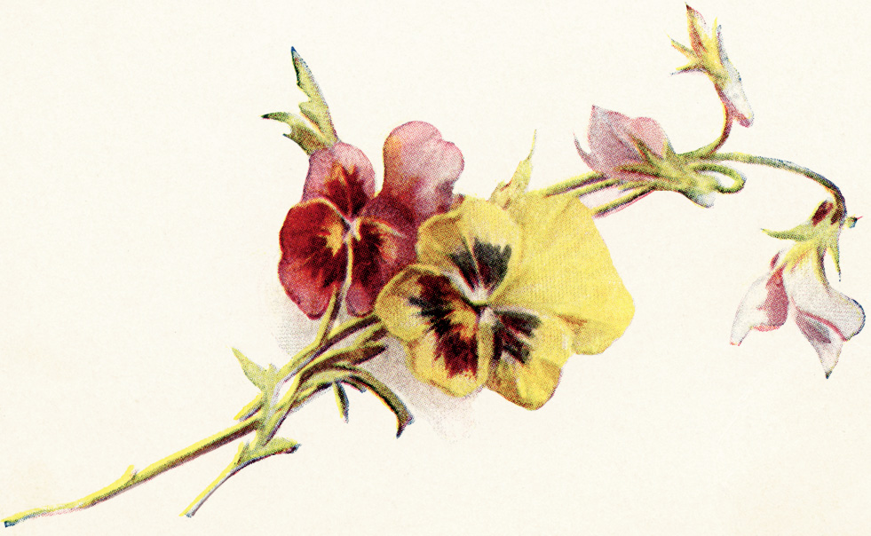 Pansy clipart vintage #12