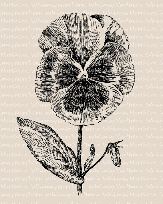 Pansy clipart vintage #15