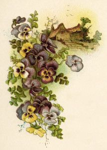 Pansy clipart vintage #1