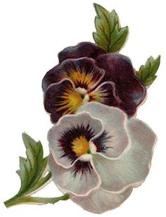 Pansy clipart vintage flower border Art FLOWERS/ Pansy and ·