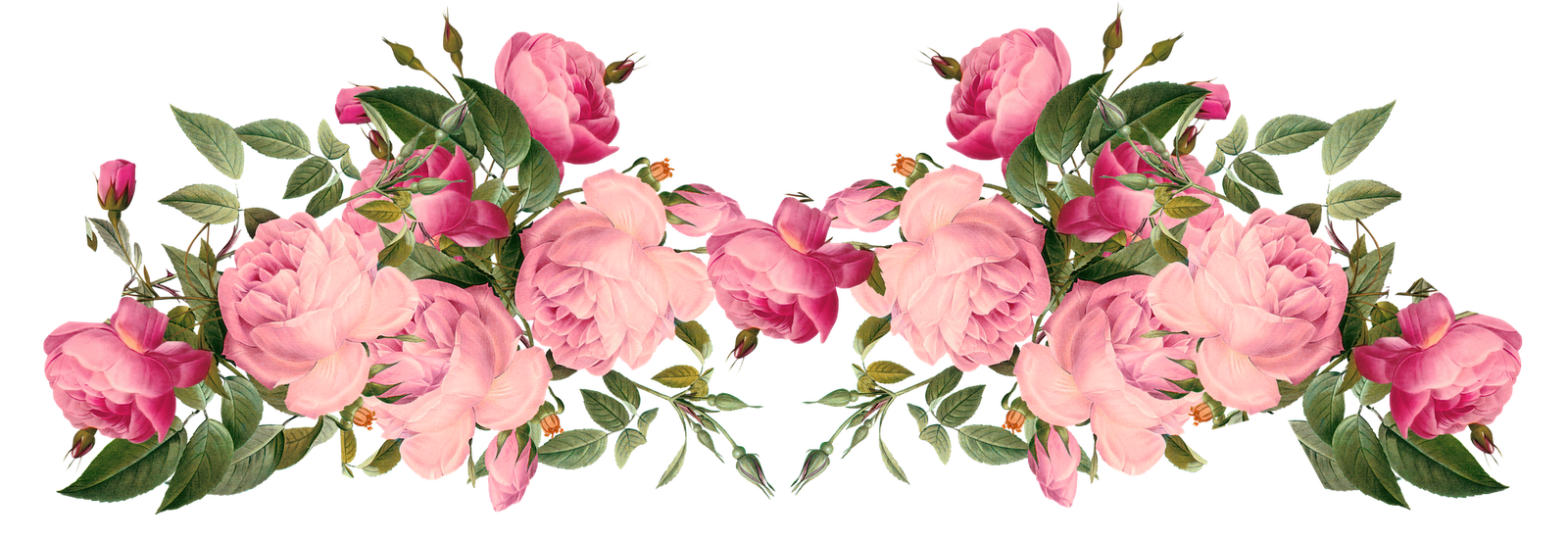Rose clipart png tumblr #12