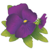 Pansy clipart viola flower #1