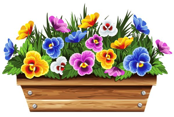 Pansy clipart violet flower With Box Violets Pinterest PNG
