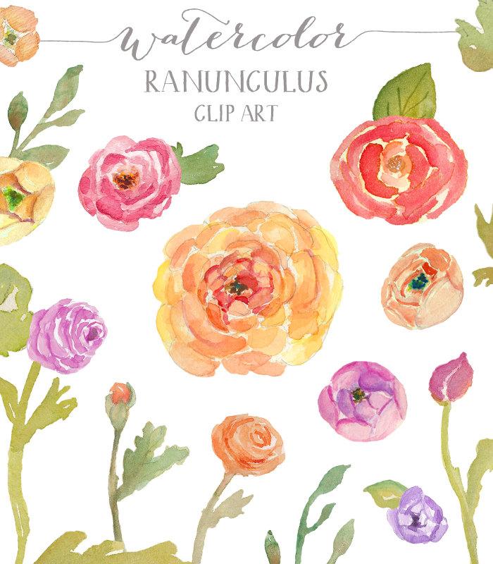 Pansy clipart watercolor Ranunculus Watercolor Creative Clip Market