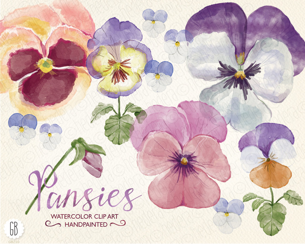 Pansy clipart watercolor Viola bouquet spring hand flowers