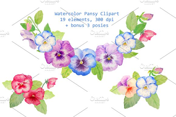 Pansy clipart watercolor Drawn Watercolor Illustrations Pansy Hand
