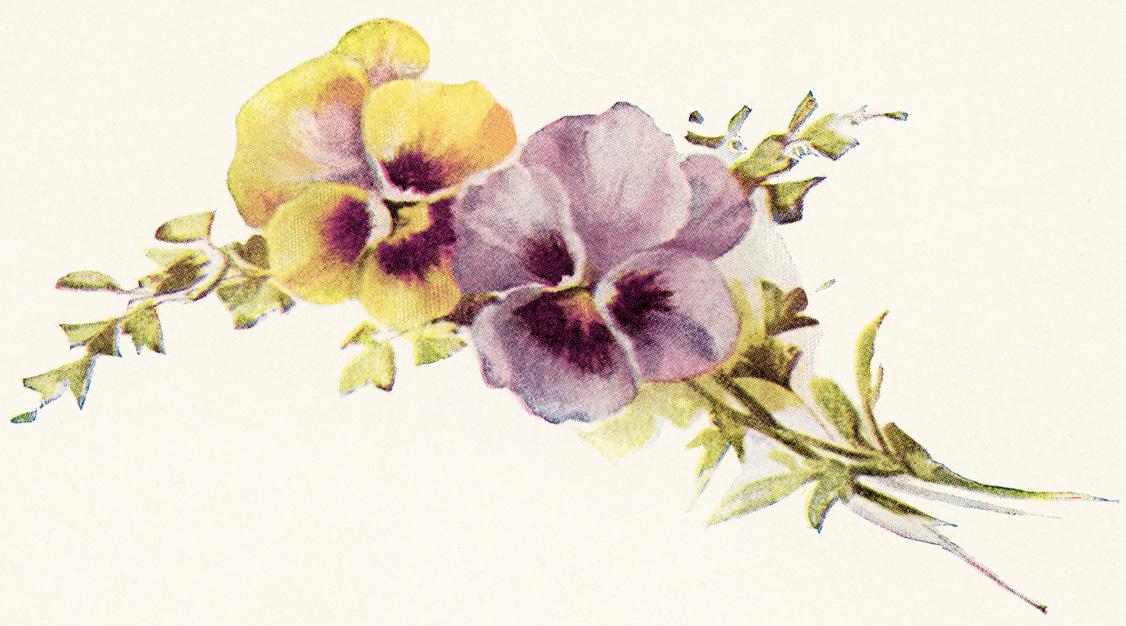 Vintage Flower clipart purple Pansy garden  Flower pictures