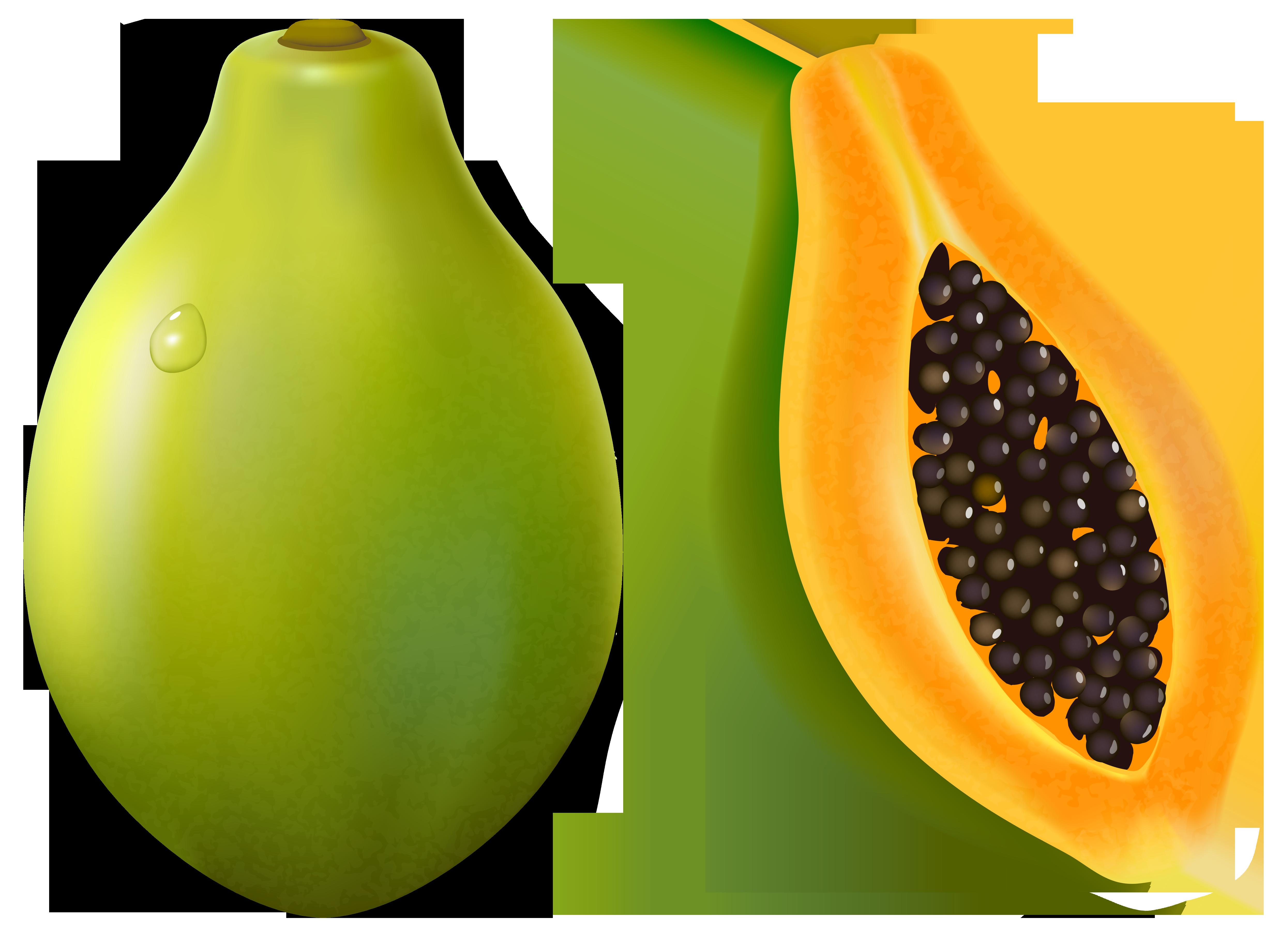 Papaya clipart Papaya  Tags: PNG Gallery