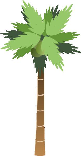 Drawn palm tree rainforest tree #3