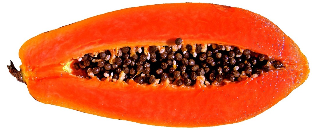 Papaya clipart funny Of com More Be Why