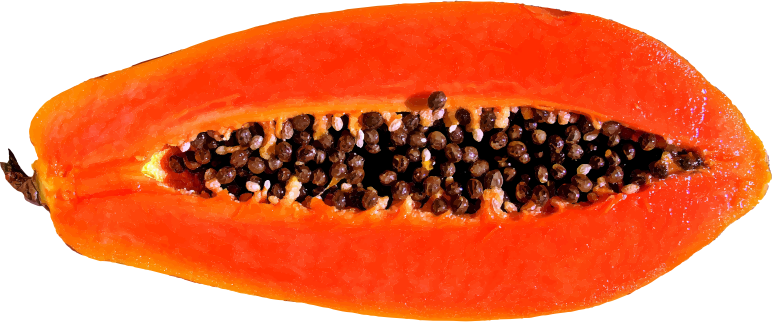 Papaya clipart papaya fruit MEDIUM Clipart Papaya IMAGE (PNG)