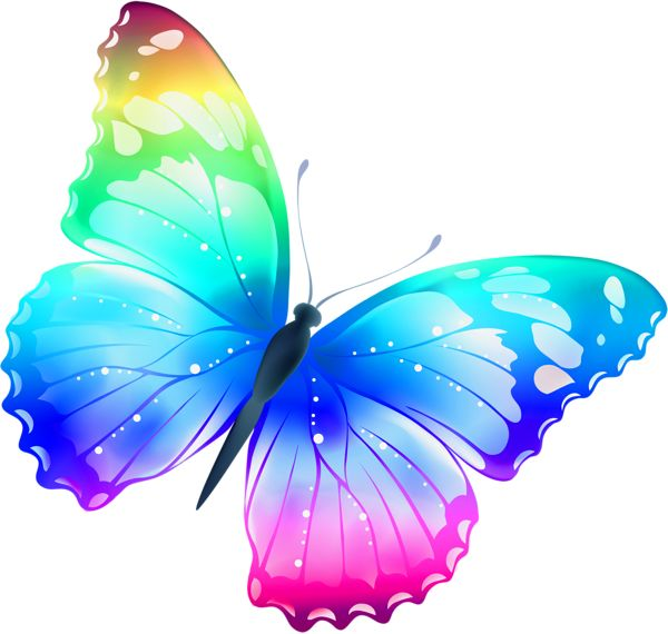 Papillon clipart cartoon About on Pinterest papillons butterfly