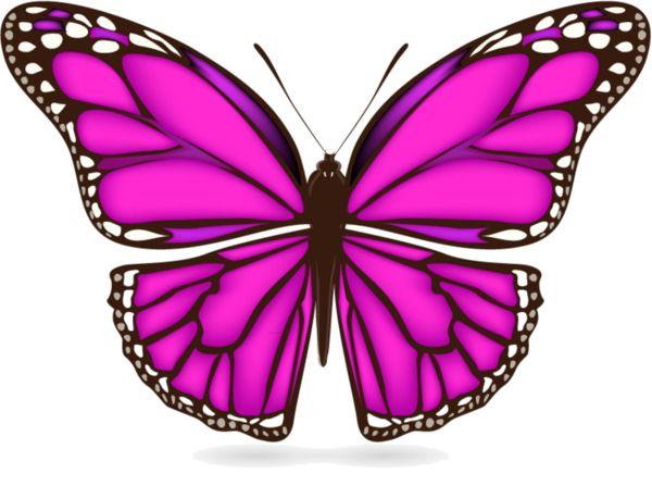 Papillon clipart bug Papillons images about best BugsButterflyScrapButterflies