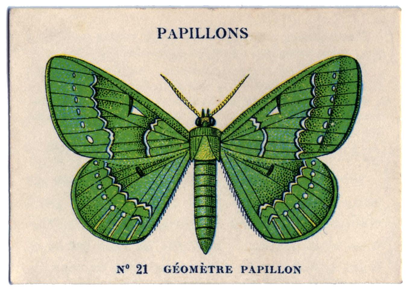 Papillon clipart bug Graphics Papillons Fairy Card Papillons