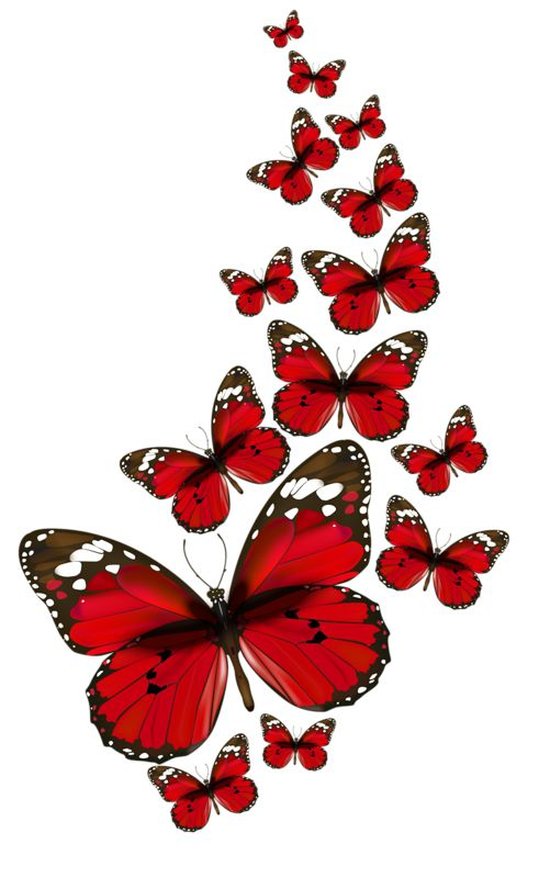 Papillon clipart cartoon Butterfly and more Wild Red