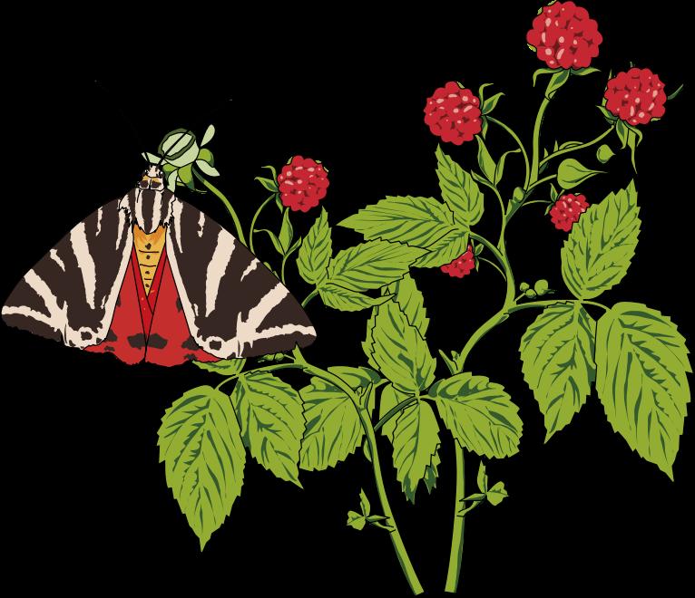Papillon clipart small IMAGE Papillon Clipart Mottled