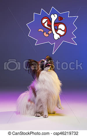 Papillon clipart small Photo portrait puppy of of