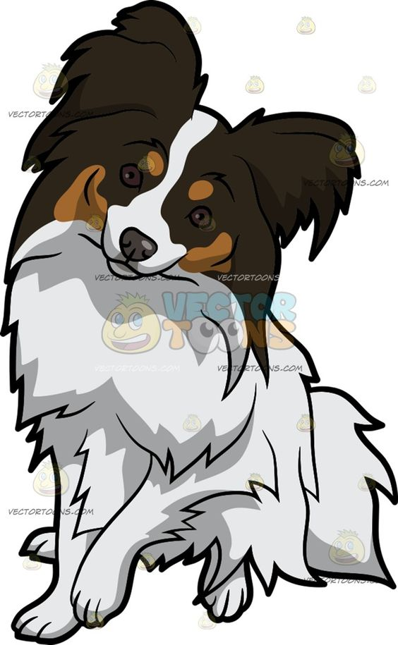 Papillon clipart small Intrigued brown An A Intrigued