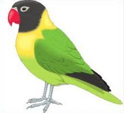 Parakeet clipart Parakeet Clipart Parakeet Free